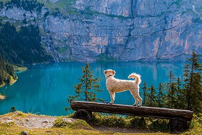 Ferien mit dem Hund und Haustier