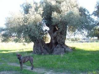 Ferienwohnung Ferienappartment DELFINO (101609), Sciacca, Agrigento, Sizilien, Italien, Bild 16