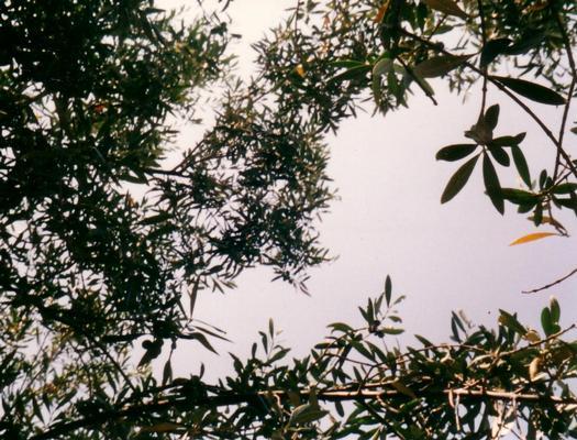 Ferienwohnung Ferienappartment GUFO (101610), Sciacca, Agrigento, Sizilien, Italien, Bild 12