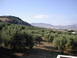 Ferienwohnung Ferienappartment GUFO (101610), Sciacca, Agrigento, Sizilien, Italien, Bild 8