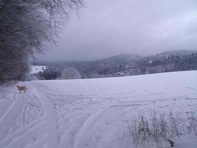 Ferienhaus Mietz (1014005), Presseck, Frankenwald, Bayern, Deutschland, Bild 3