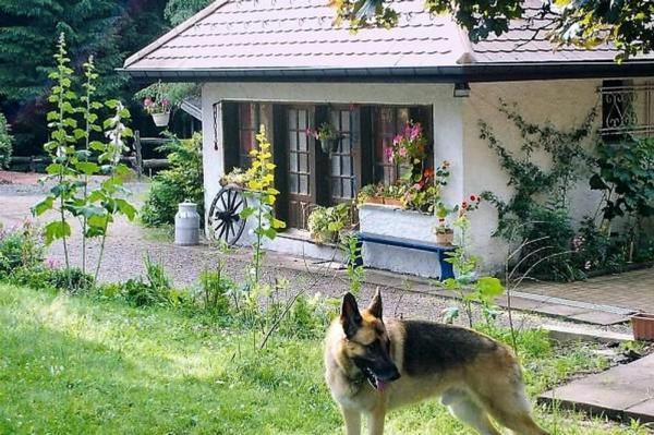 Ferienhaus Maison  Stöckle 85 qm im Naturpark der Vogesen,  mit Saunahaus (1077120), La Rosière, Haute-Saône, Franche-Comté, Frankreich, Bild 10