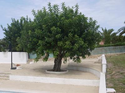 Ferienwohnung Cabo del Sol (1080645), Dénia, Costa Blanca, Valencia, Spanien, Bild 9