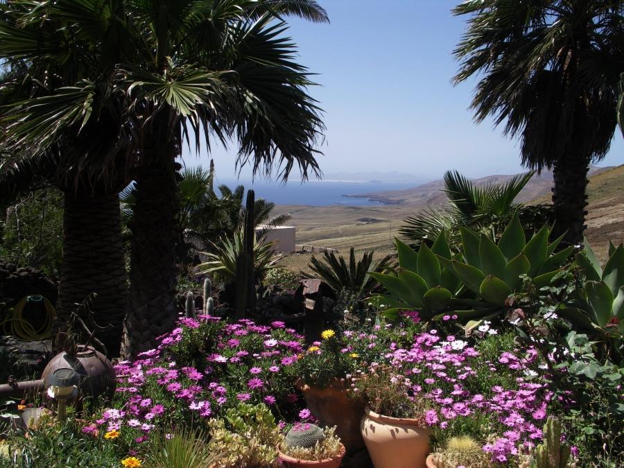 Holiday house Casa Feliz (1116966), La Asomada, Lanzarote, Canary Islands, Spain, picture 23
