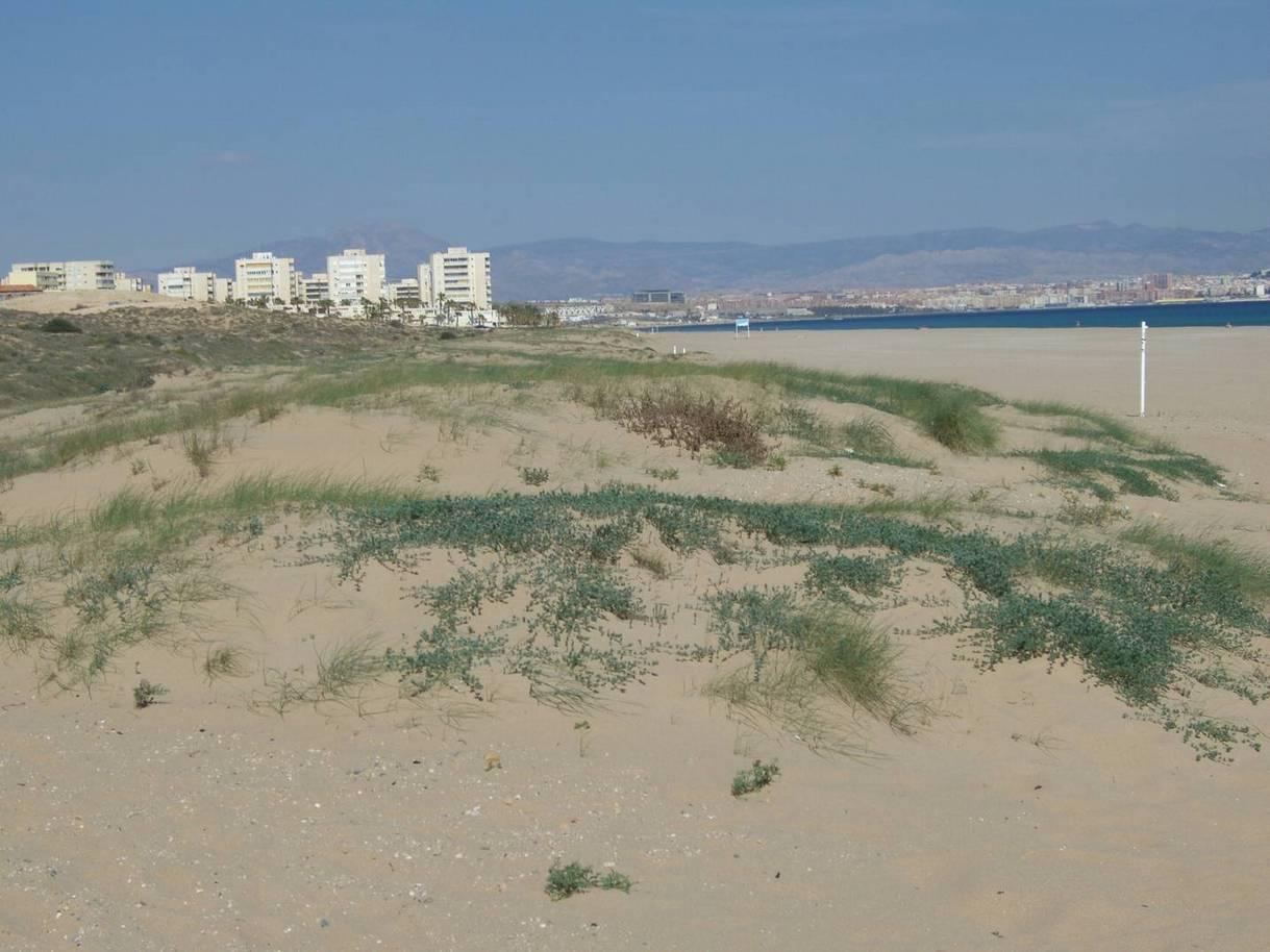 Ferienwohnung 4 Personen 62qm Costa Blanca (118835), Orihuela-Costa, Costa Blanca, Valencia, Spanien, Bild 44