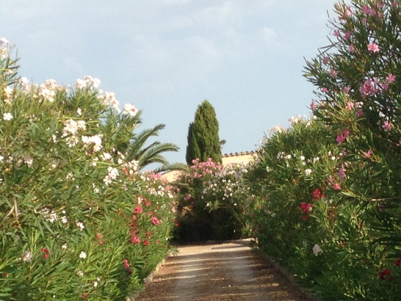 Ferienhaus Finca Casa de Campo, Montuiri (119689), Montuïri, Mallorca, Balearische Inseln, Spanien, Bild 22