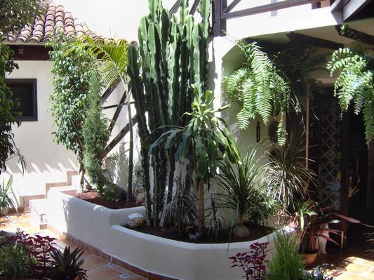 Ferienwohnung Apartment 1 (122852), Icod de los Vinos, Teneriffa, Kanarische Inseln, Spanien, Bild 28