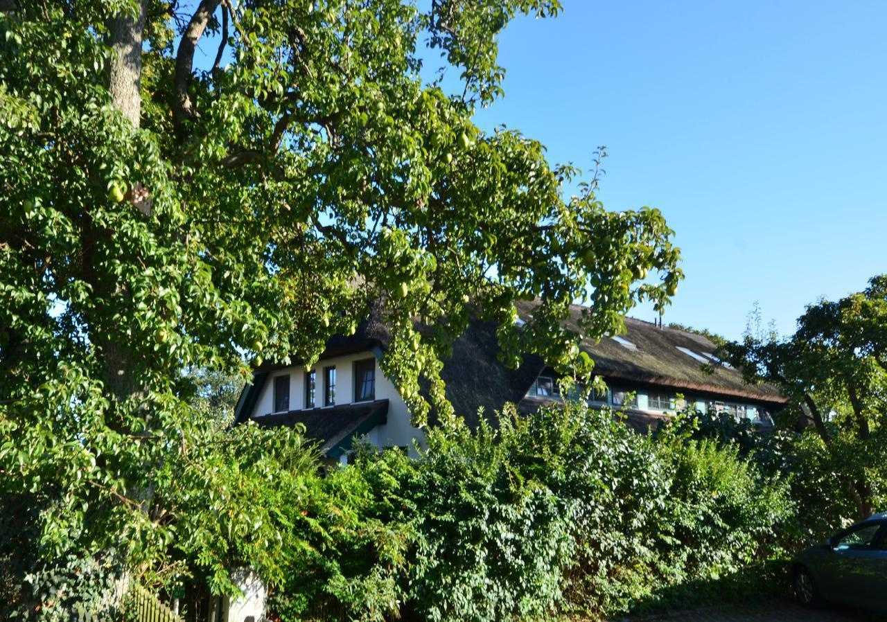 Ferienhaus Haus Strandhafer (127108), Groß Zicker, Rügen, Mecklenburg-Vorpommern, Deutschland, Bild 9