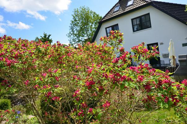 Ferienhaus Haus Seeadler (127694), Groß Zicker, Rügen, Mecklenburg-Vorpommern, Deutschland, Bild 14