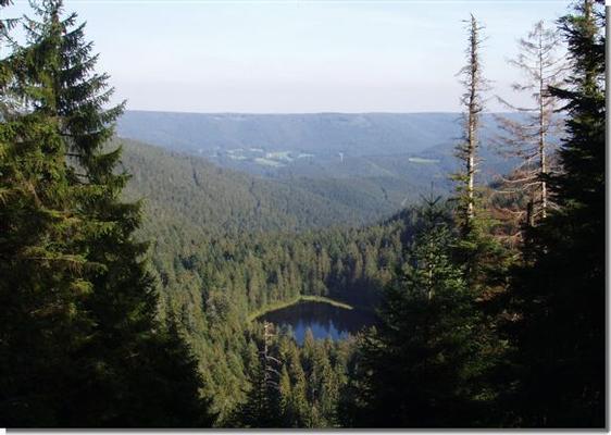 Ferienwohnung Fichtennest (136321), Baiersbronn, Schwarzwald, Baden-Württemberg, Deutschland, Bild 15