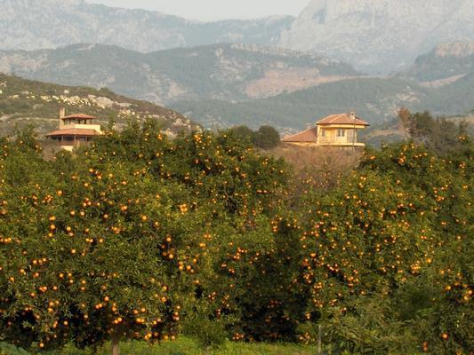 Ferienhaus in einer Villa mit Pool in Alanya/Demirtas 2 (140123), Demirtas, , Mittelmeerregion, Türkei, Bild 5
