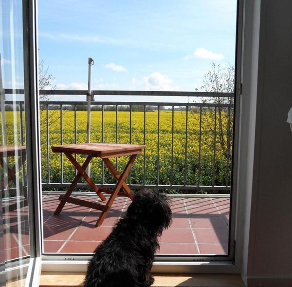 Blick über den Balkon im Frühling
