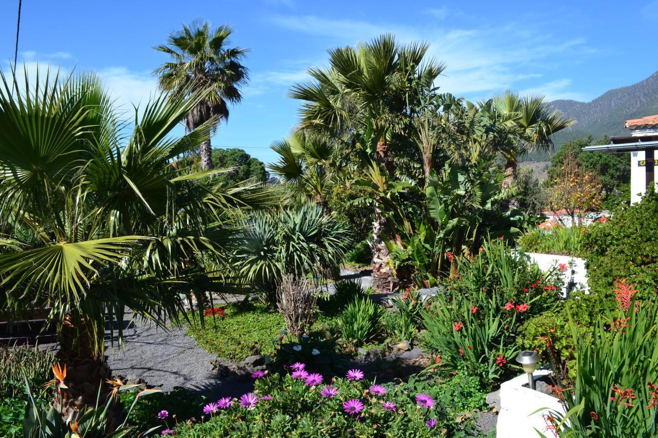 Ferienhaus Finca Primavera (144700), El Paso, La Palma, Kanarische Inseln, Spanien, Bild 15