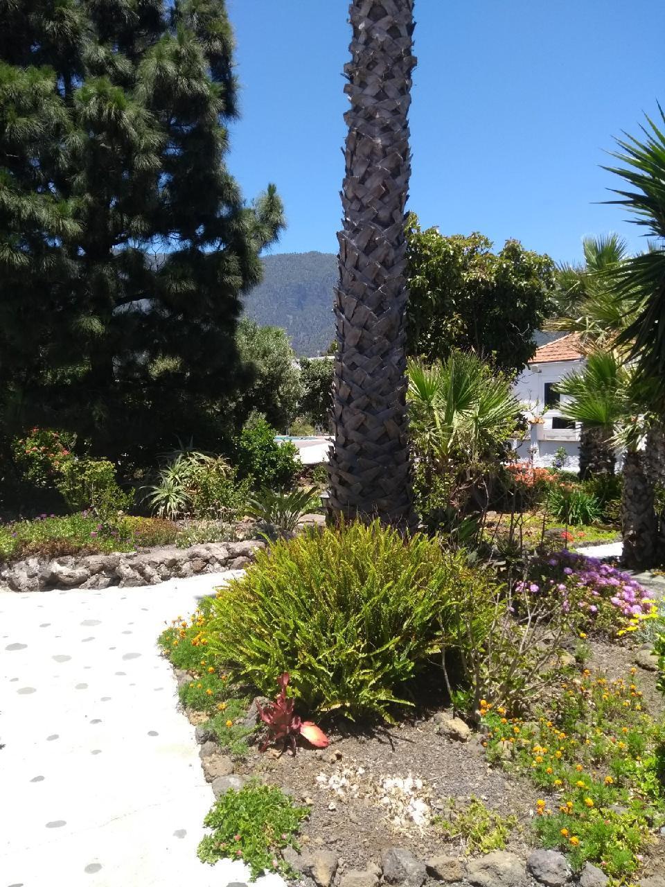 Ferienhaus Finca Primavera (144700), El Paso, La Palma, Kanarische Inseln, Spanien, Bild 21