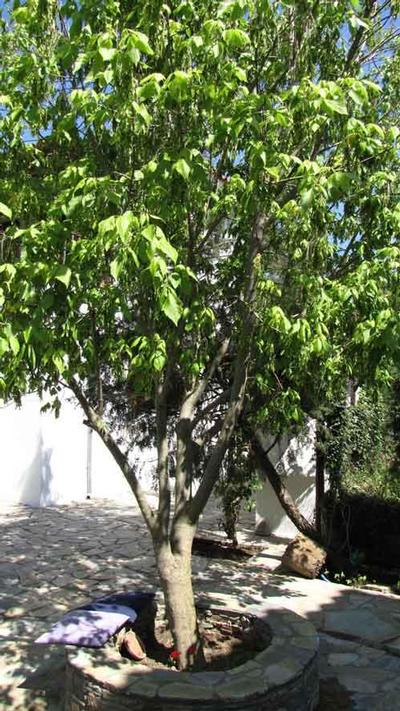 Holiday house Eleni Villa - OG (1499607), Horton (GR), Magnesia, Thessaly, Greece, picture 19