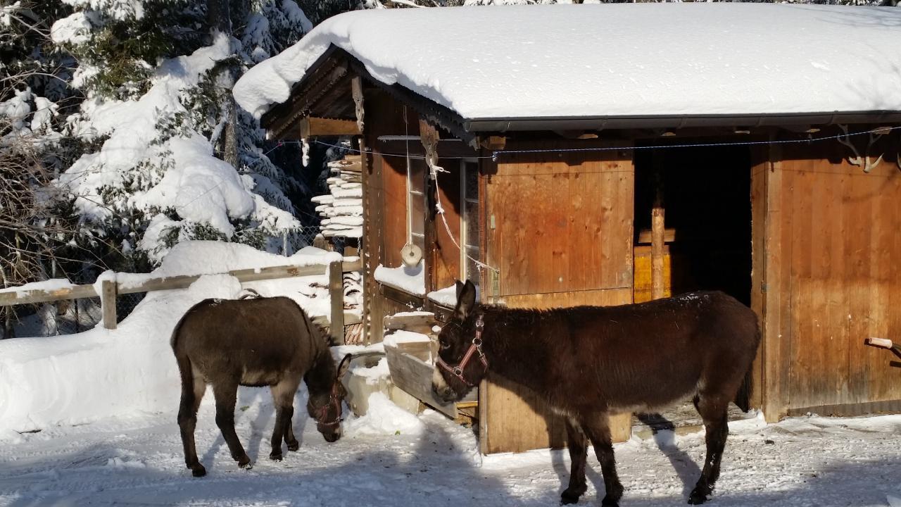 Ferienwohnung 3,5-Zimmer Ferienwohnung (1576388), Sattel, Schwyz, Zentralschweiz, Schweiz, Bild 19