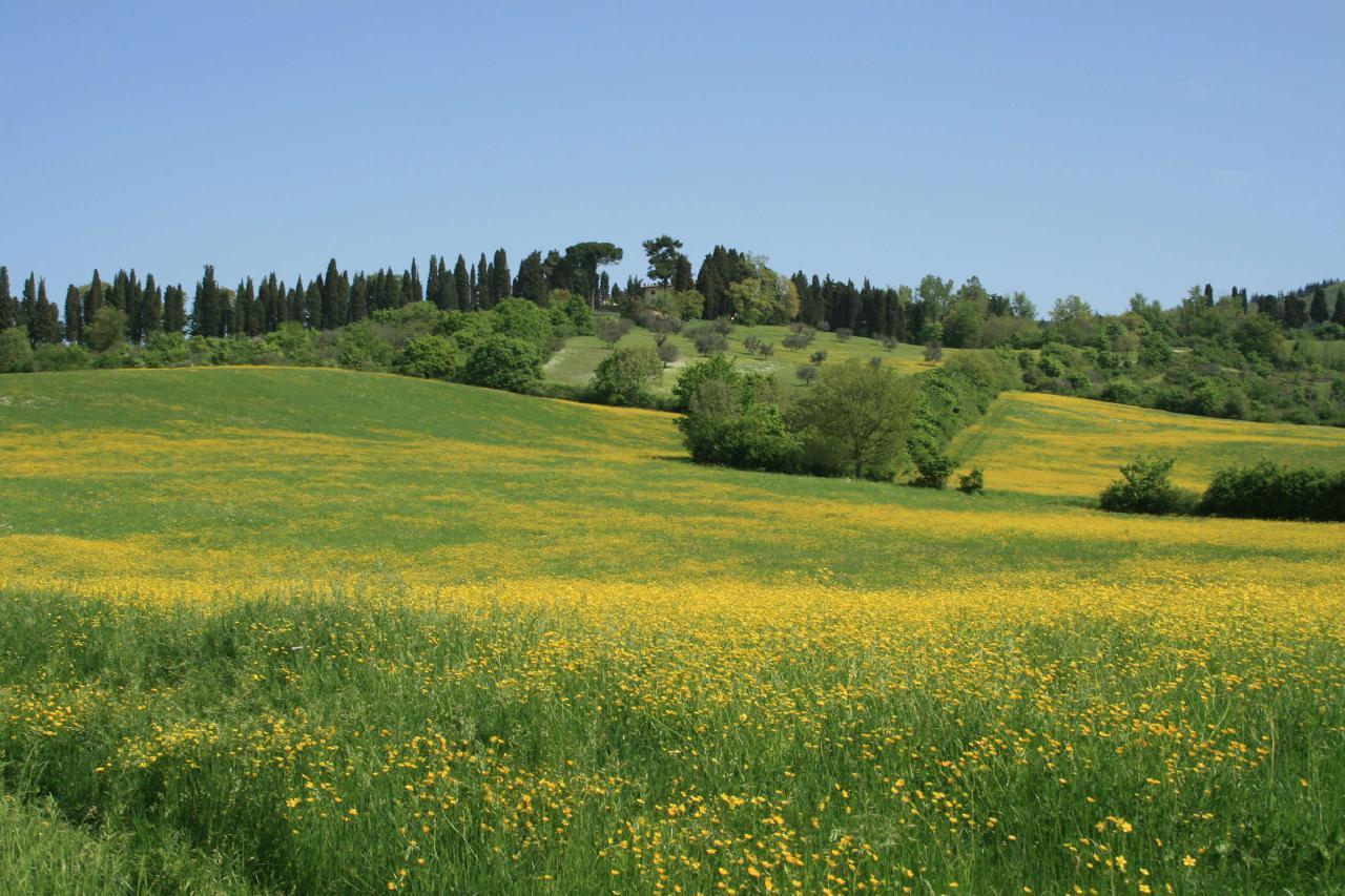 Ferienwohnung Apartament in the florentine Hills (1582733), Pratolino, Florenz - Chianti - Mugello, Toskana, Italien, Bild 14