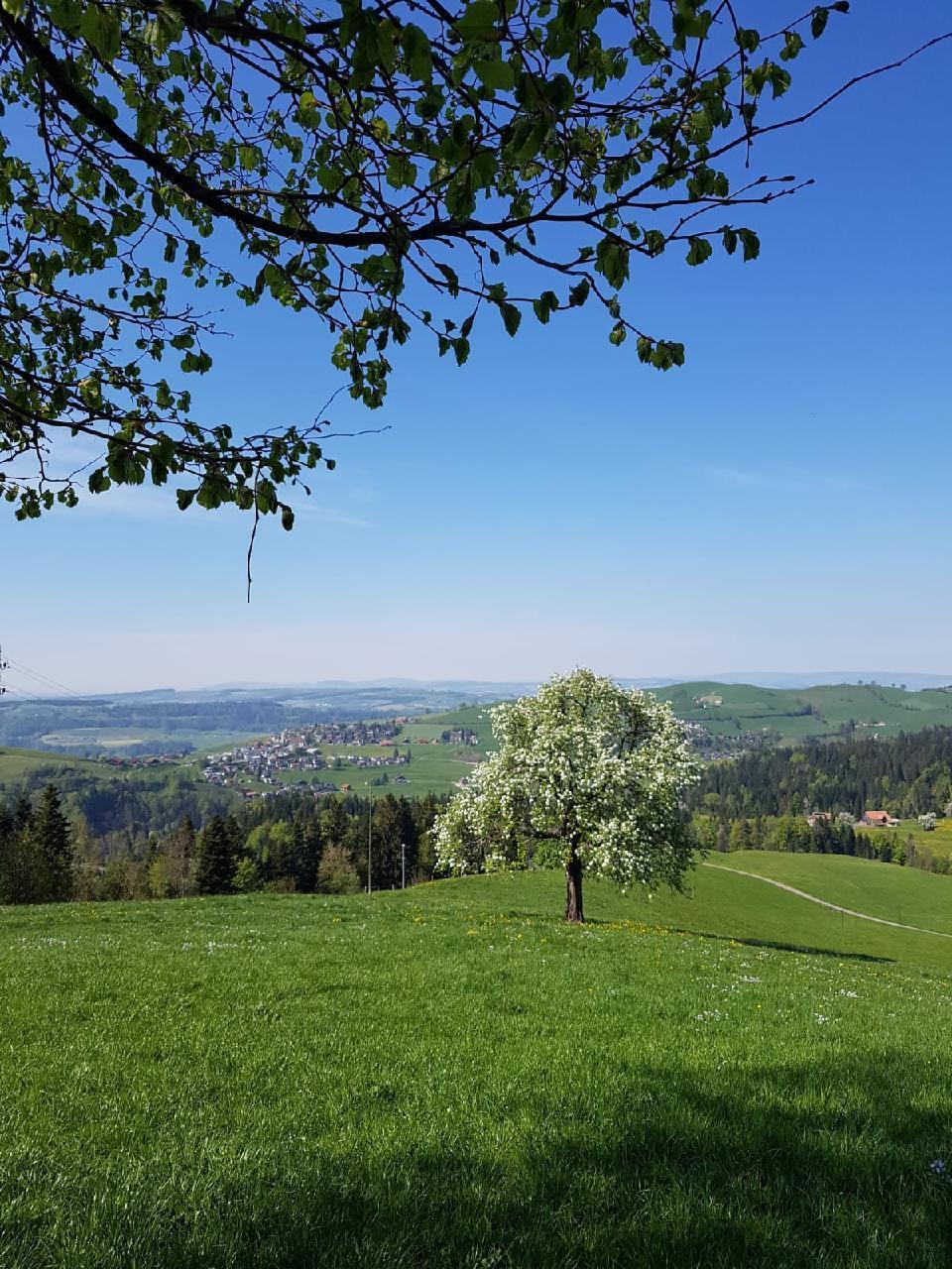Ferienwohnung Brudersrüti (1586106), Schwarzenberg LU, Luzern, Zentralschweiz, Schweiz, Bild 22