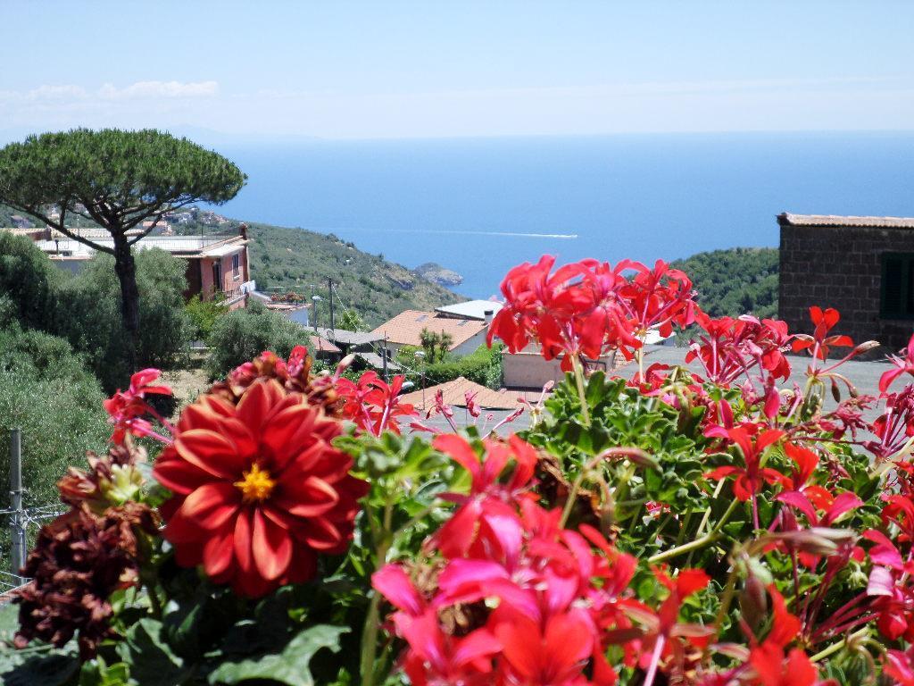 Ferienhaus Il Casolare Harmony. Ferienhaus umgeben von Grün (1685979), Massa Lubrense, Amalfiküste, Kampanien, Italien, Bild 4
