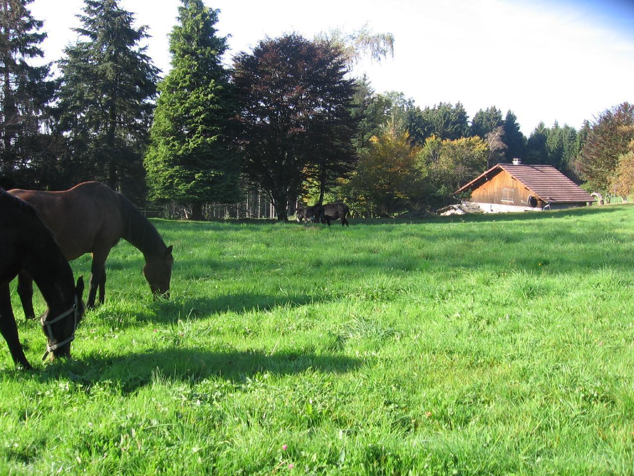 Ferienhaus Steinhäuschen Shila, im Naturparc der Vogesen,  mit Saunahaus (1717460), La Rosière, Haute-Saône, Franche-Comté, Frankreich, Bild 24