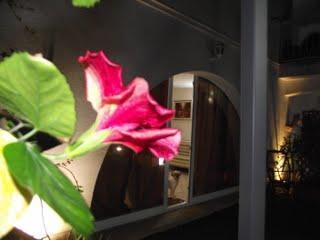 Appartement de vacances VILLA GENNA (1729788), San Vito Lo Capo, Trapani, Sicile, Italie, image 16