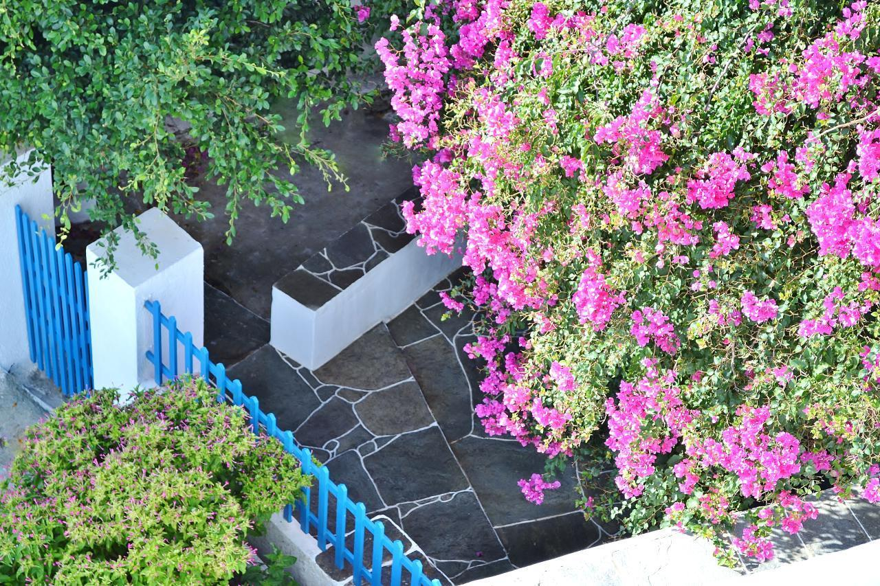 Holiday apartment Purple Flower Villa - Suite (1740751), Siphnos, Sifnos, Cyclades, Greece, picture 3