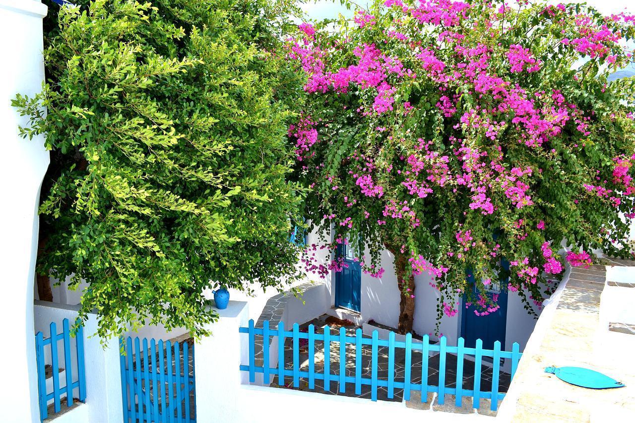 Ferienwohnung Purple Flower Villa - Suite (1740751), Siphnos, Sifnos, Kykladen, Griechenland, Bild 2