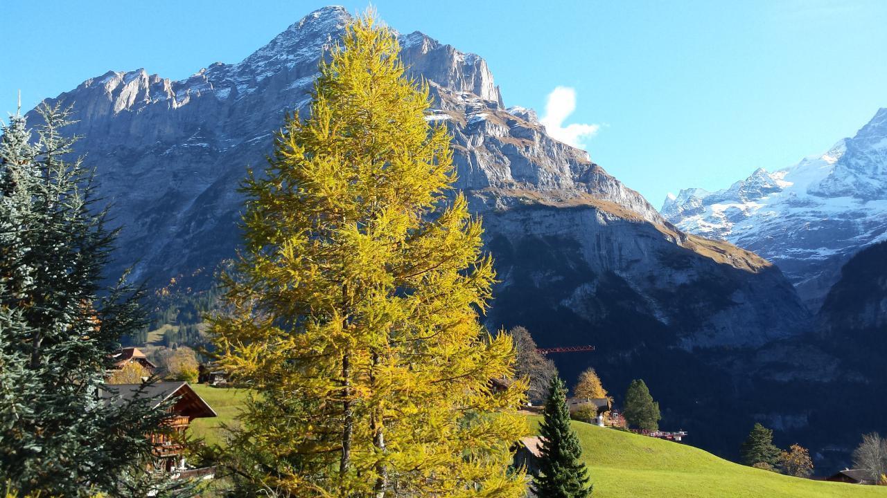Ferienwohnung Chalet Moosrain - Studio West (1978339), Grindelwald, Jungfrauregion, Berner Oberland, Schweiz, Bild 7