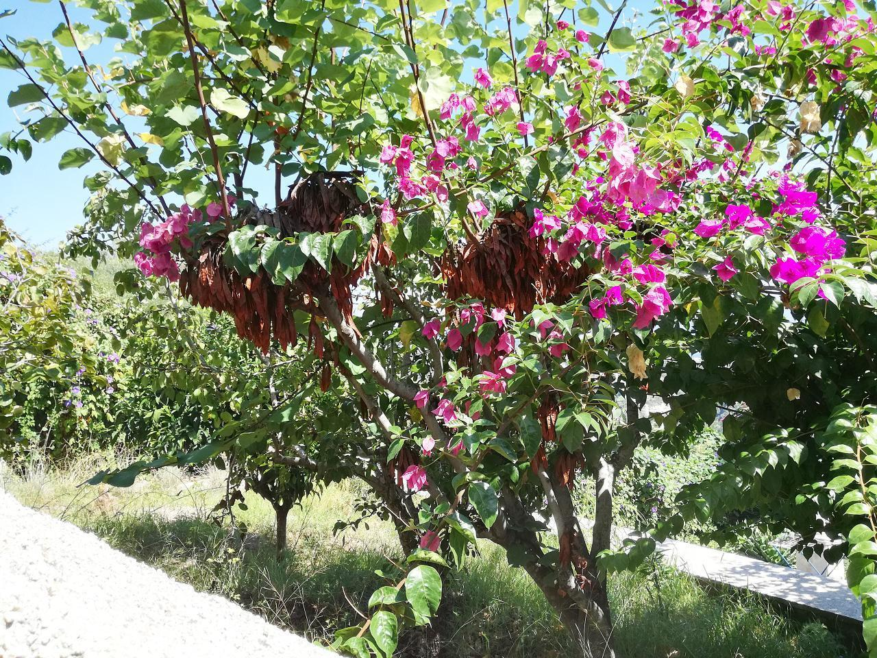 Maison de vacances Ferienhaushälfte Oleandro auf sizilianischer Insel mit atemberaubenden Meeres-Rundblick (2045159), Lipari, Lipari, Sicile, Italie, image 40