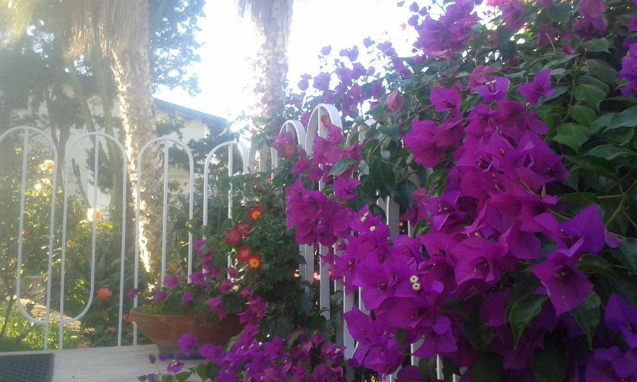 Holiday house Villa Aliotis (2060333), Alcamo, Trapani, Sicily, Italy, picture 9