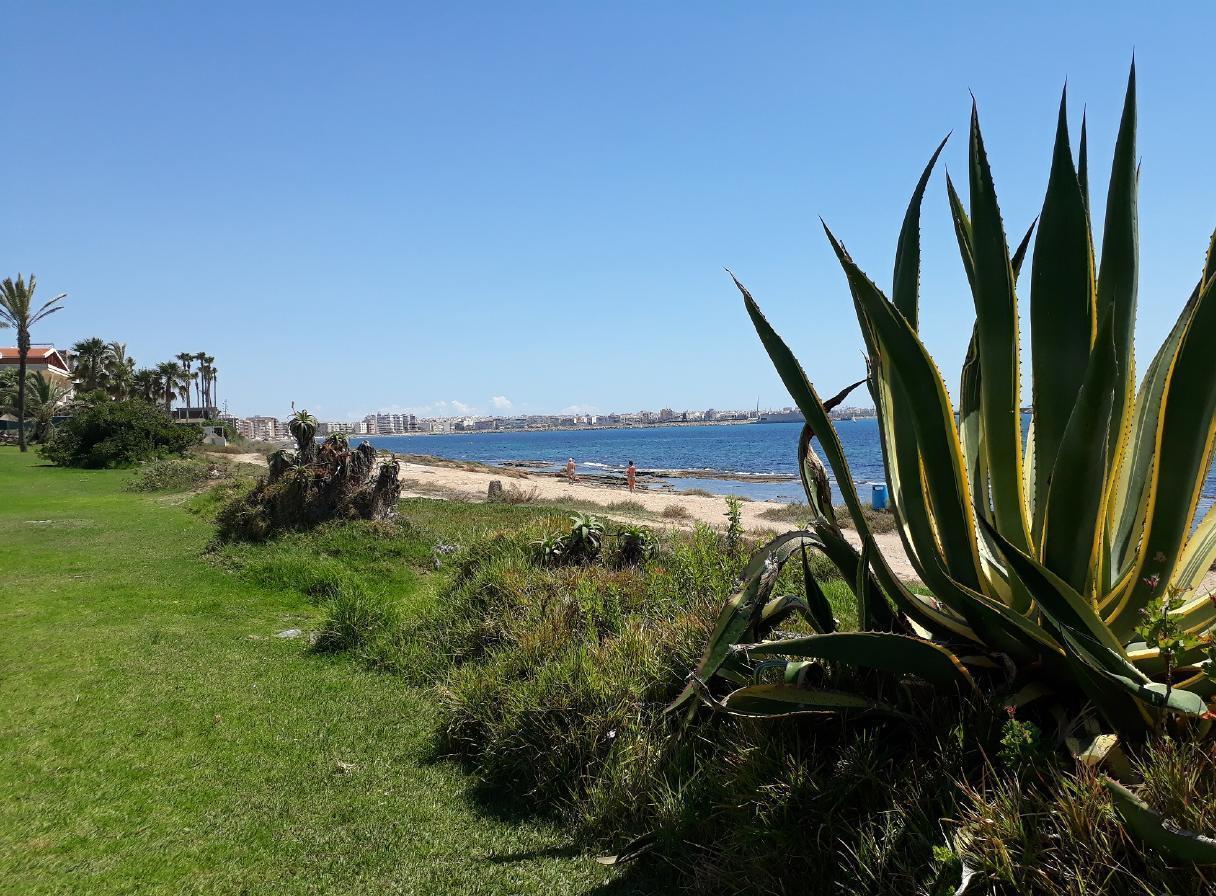 Ferienwohnung mit Parkplatz und Pool (2068497), Torrevieja, Costa Blanca, Valencia, Spanien, Bild 8