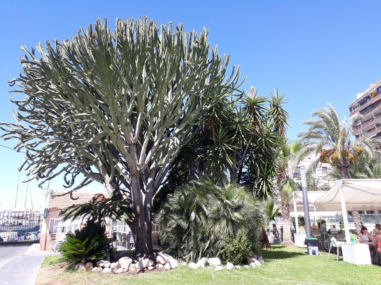 Ferienwohnung mit Parkplatz und Pool (2068497), Torrevieja, Costa Blanca, Valencia, Spanien, Bild 23