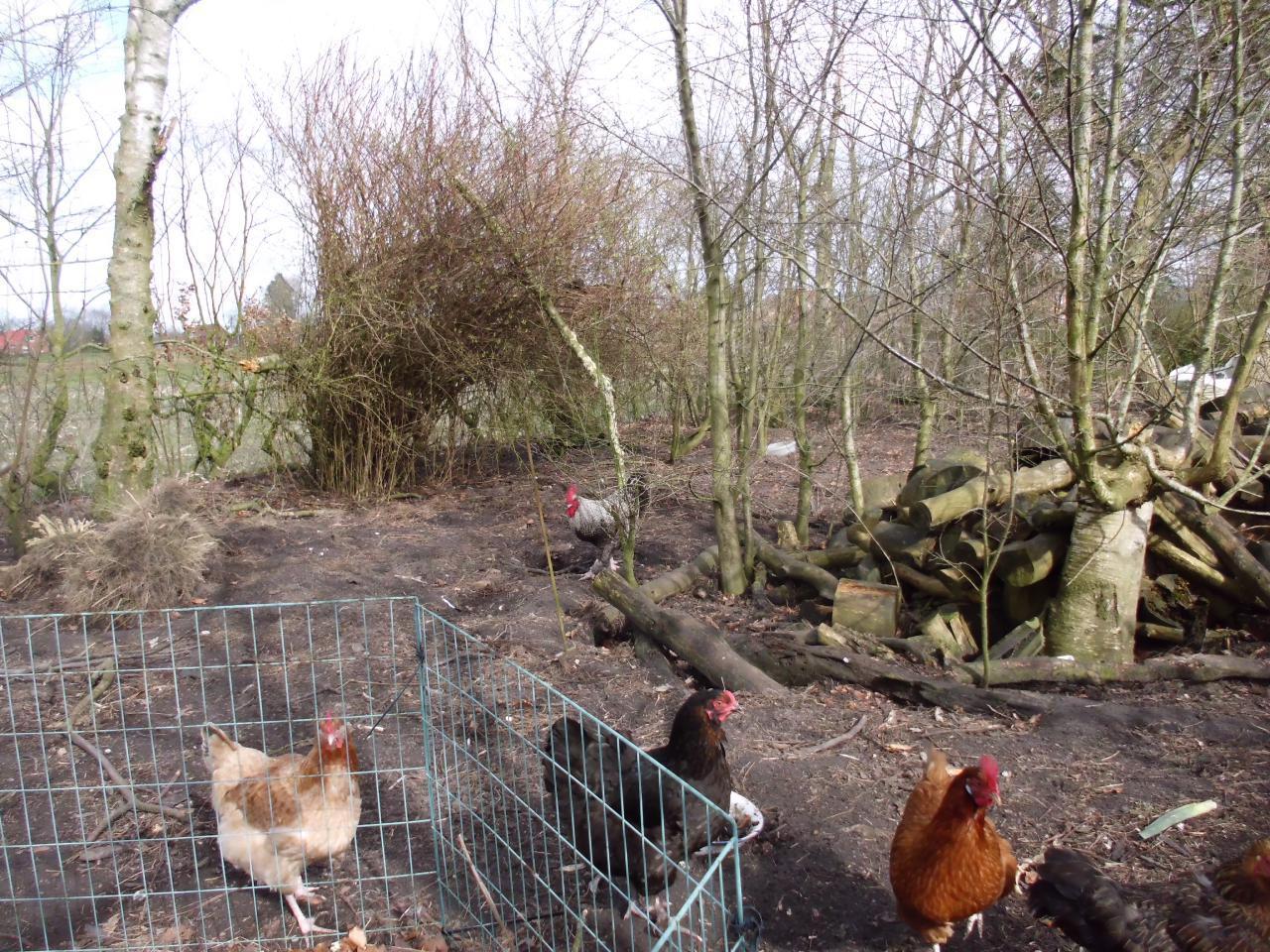 Hier werden frische Eier gemacht!