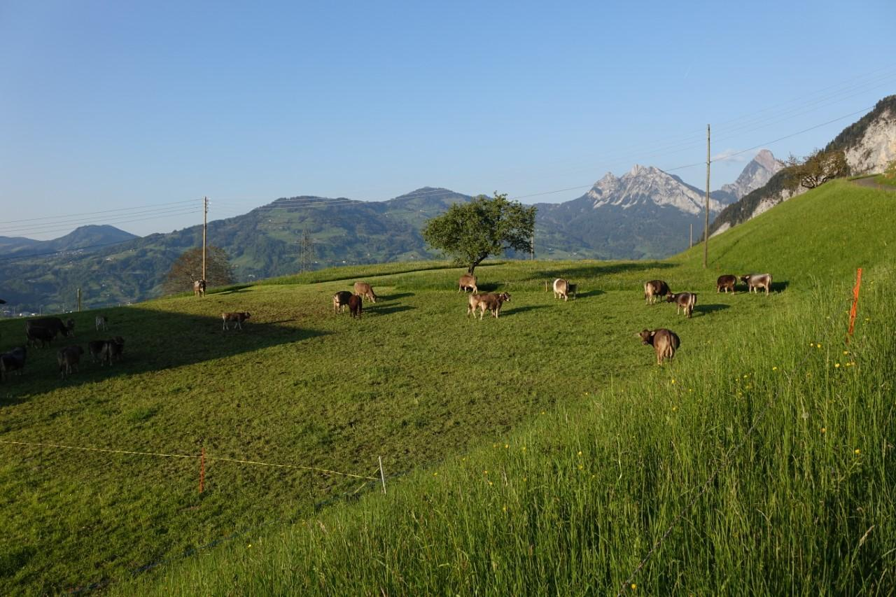 Ferienwohnung Langberg (2122212), Lauerz, Schwyz, Zentralschweiz, Schweiz, Bild 22