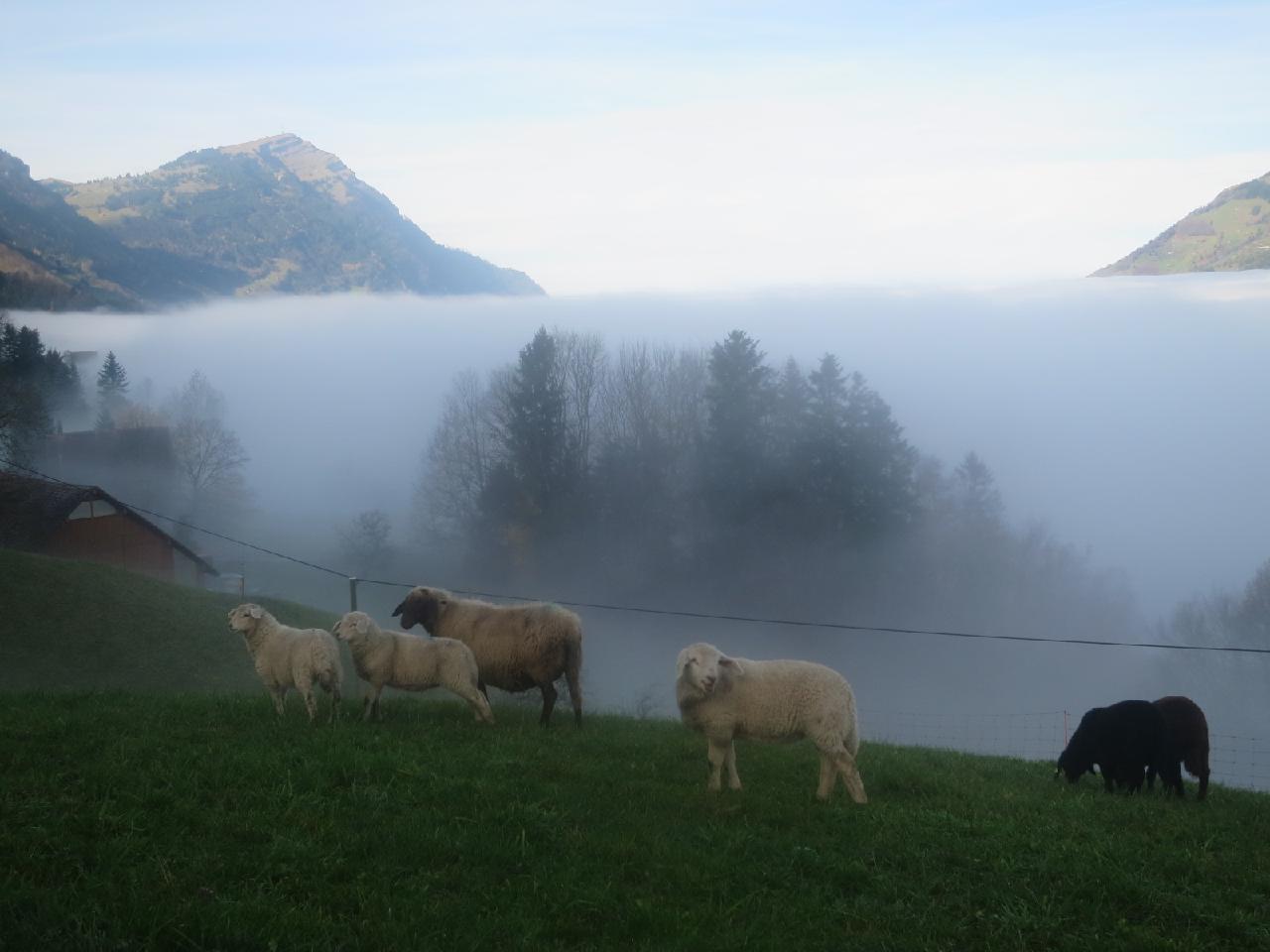 Ferienwohnung Langberg (2122212), Lauerz, Schwyz, Zentralschweiz, Schweiz, Bild 13