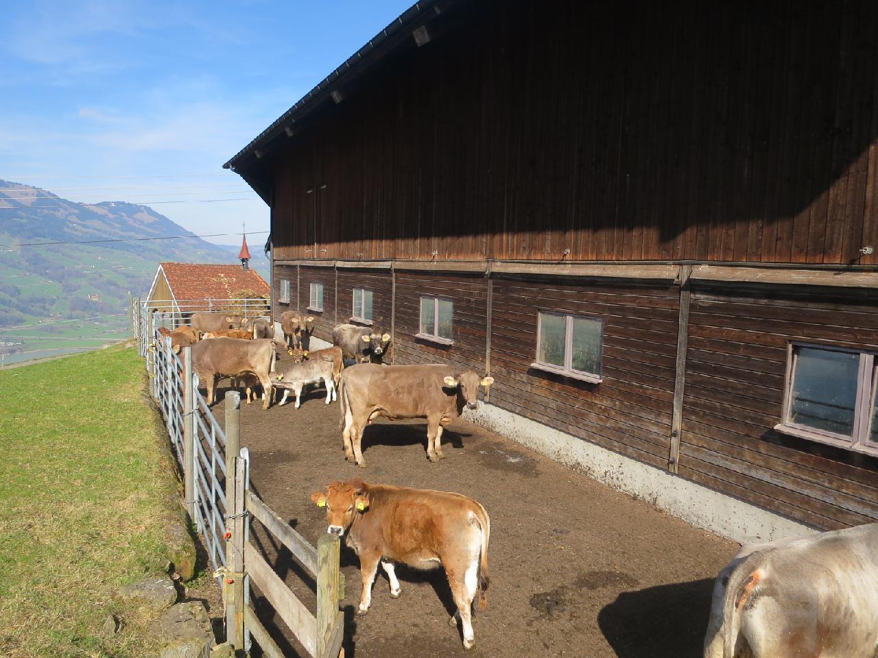 Ferienwohnung Langberg (2122212), Lauerz, Schwyz, Zentralschweiz, Schweiz, Bild 11