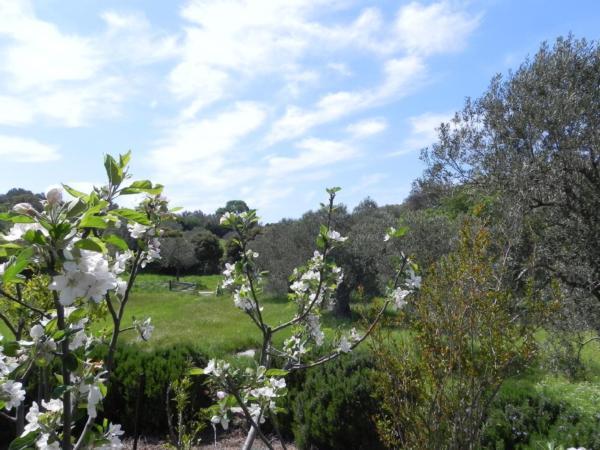 Ferienhaus Olive Garden - Oase der Ruhe (2167110), Vafeios, Lesbos, Ägäische Inseln, Griechenland, Bild 29