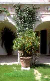 Ferienwohnung VILLA COLLOREDO - Granaretto (22826), Dolo (IT), Venedig, Venetien, Italien, Bild 2