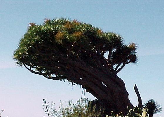 Ferienhaus FINCA TOPO DEL DRAGO (224349), Puntagorda, La Palma, Kanarische Inseln, Spanien, Bild 28