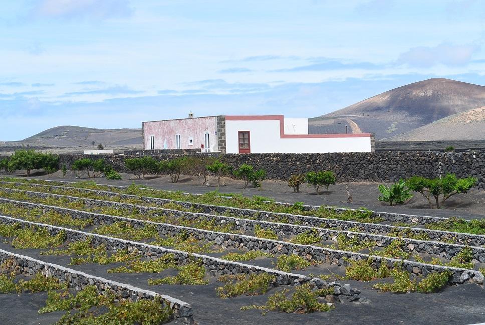 300 qm Haus im Weingebiet von Lanzarote Ferienhaus  Lanzarote