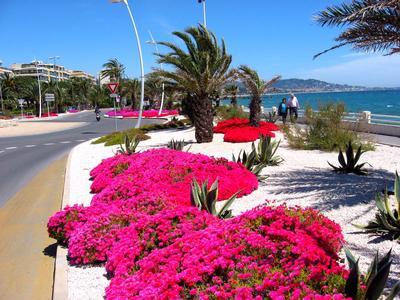 Ferienwohnung Appartement 'Près de Cannes' (226572), Mandelieu la Napoule, Côte d'Azur, Provence - Alpen - Côte d'Azur, Frankreich, Bild 20