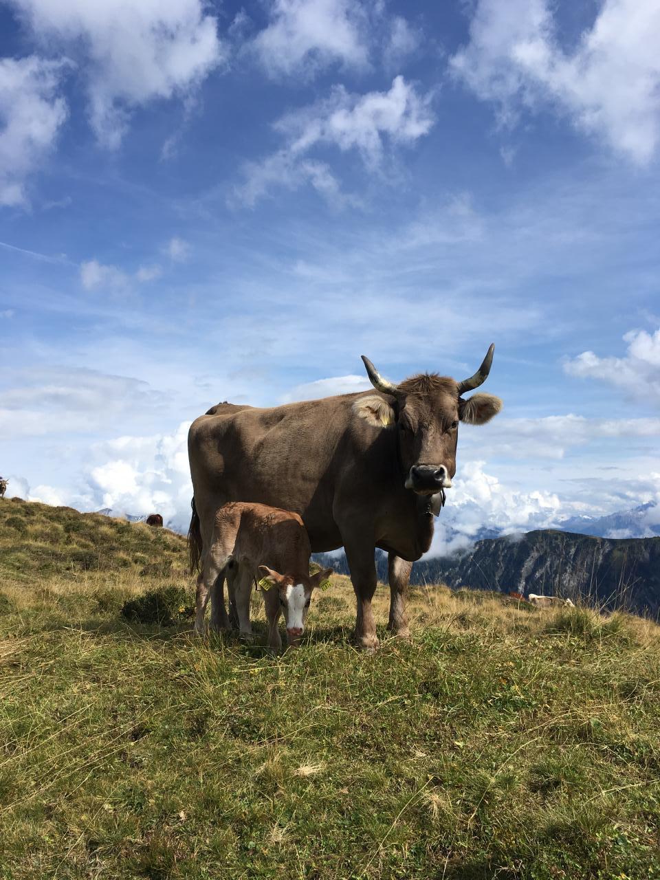 Ferienwohnung Hof Unterhus (2290055), Tenna (CH), Safiental, Graubünden, Schweiz, Bild 10