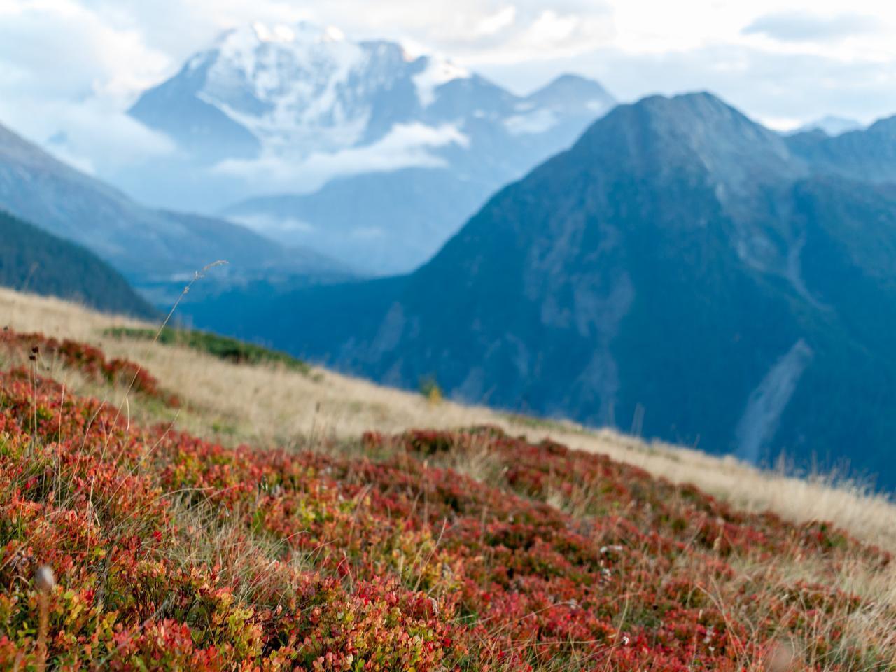 Ferienwohnung Chalet Bergfink | Ferienwohnung in den Walliser Bergen auf Rosswald (2311758), Rosswald, Brig - Simplon, Wallis, Schweiz, Bild 14