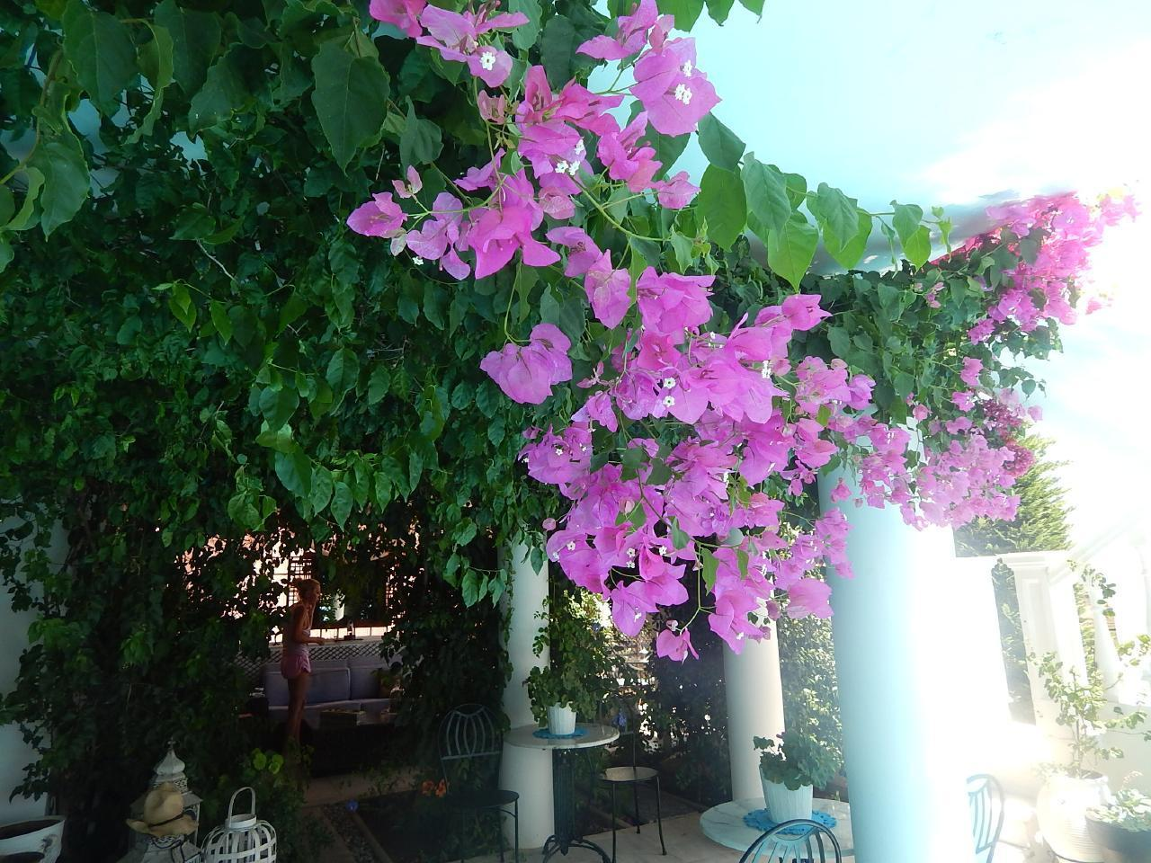 Holiday house Haus mit privatem Pool am Stadtrand von Athen (2329498), Rafina, , Attica, Greece, picture 15