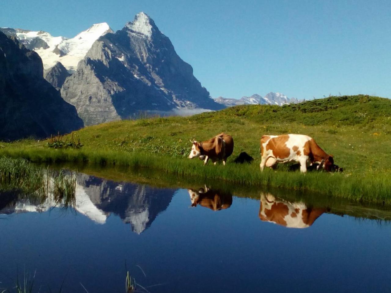 Ferienhaus Bühlen (2331113), Grindelwald, Jungfrauregion, Berner Oberland, Schweiz, Bild 23