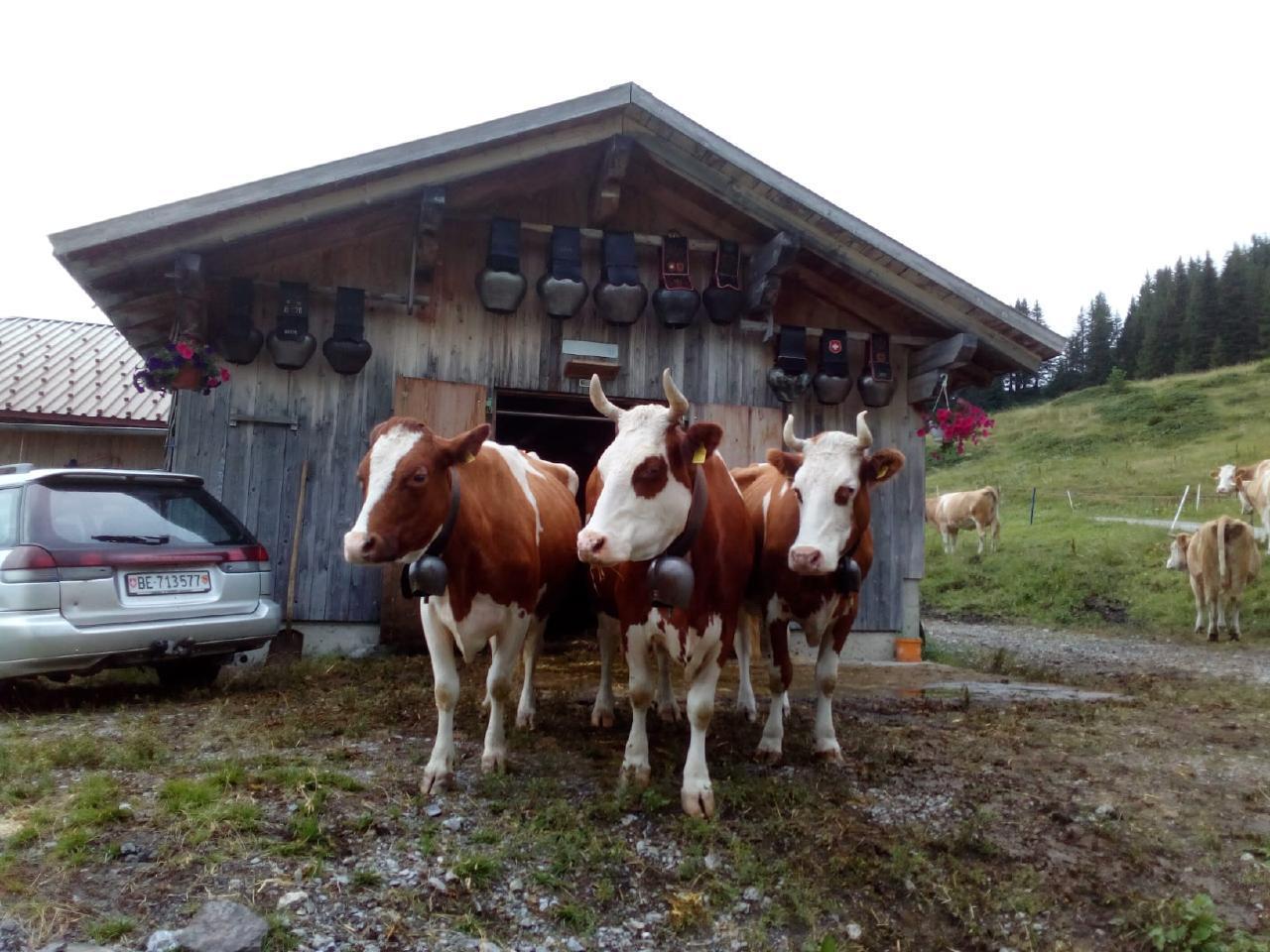 Ferienhaus Bühlen (2331113), Grindelwald, Jungfrauregion, Berner Oberland, Schweiz, Bild 24