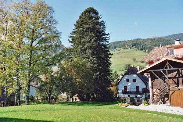 Ferienwohnung Villa Lageder Burgfrieden (235511), Sarnthein (Sarentino), Bozen, Trentino-Südtirol, Italien, Bild 10