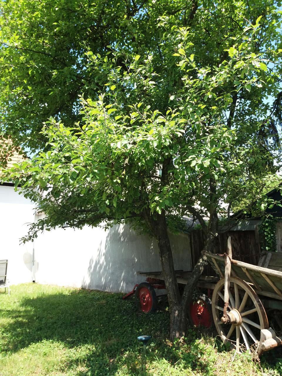 Maison de vacances Hauskirchen 30 Minuten vor Wien (2423579), Hauskirchen, Weinviertel, Basse Autriche, Autriche, image 6