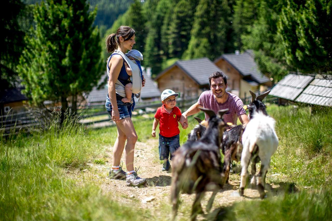 Ferienhaus Hütte für bis zu 6 Personen (244584), Turrach, Murtal, Steiermark, Österreich, Bild 5