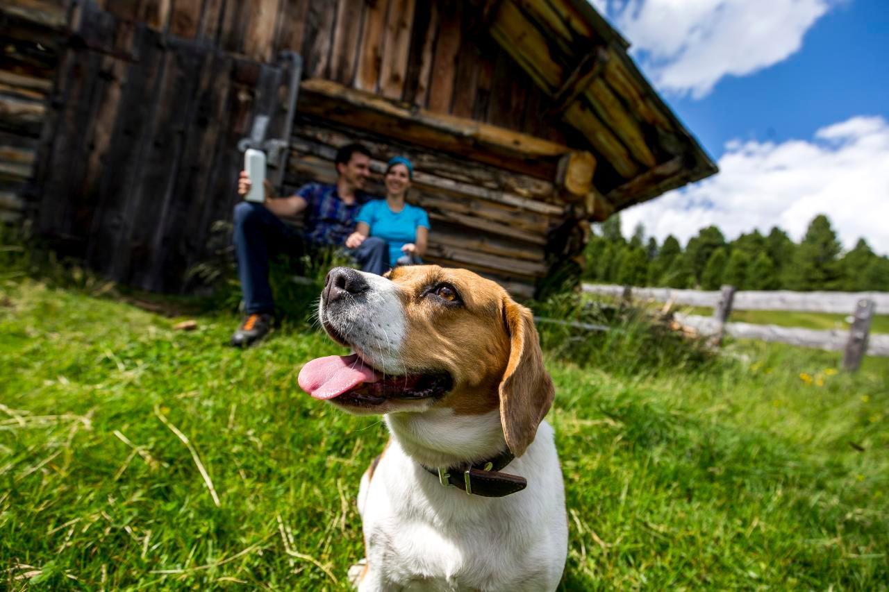 Ferienhaus Hütte für bis zu 6 Personen (244584), Turrach, Murtal, Steiermark, Österreich, Bild 8
